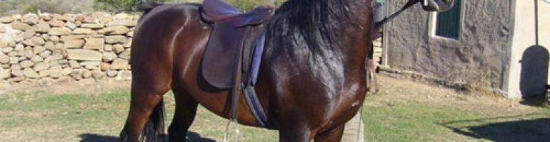 Лошади породы Басуто