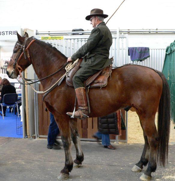 Лошади породы Мареммано с наездником, фото