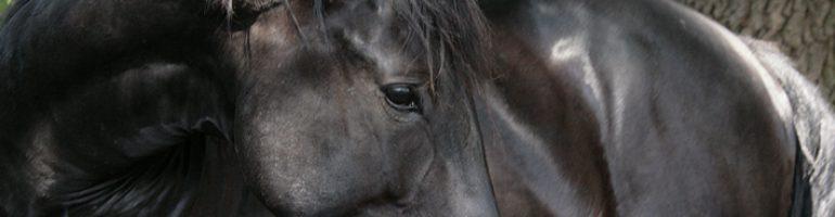 Лошади породы Нониус