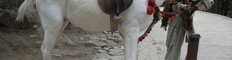 Белуджистанская порода лошадей