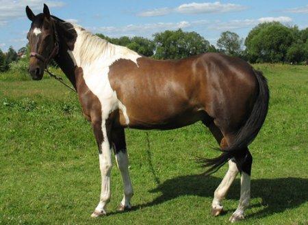Лошади Пейнт, фото