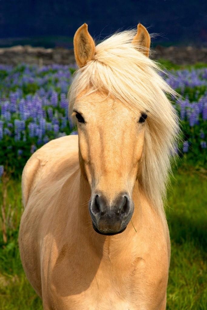 Лошадь породы Лосино в заповеднике, фото