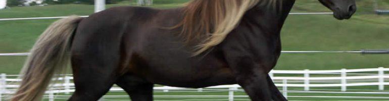 Лошади породы Роки Маунтин