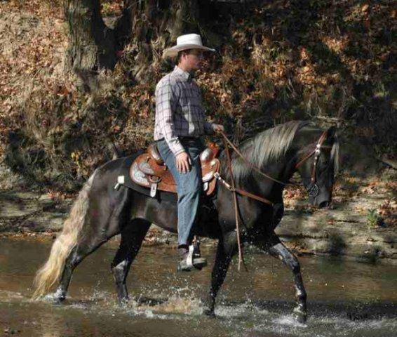 Лошадь породы Роки Маунтин, фото