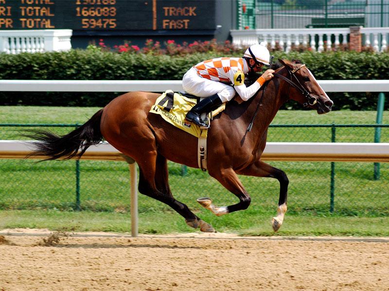 Лошадь породы Рэкинг хорс летит, как пуля, фото