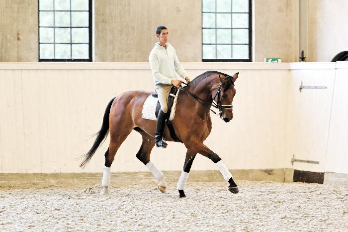 Лошадь породы Солерно с наездником, фото
