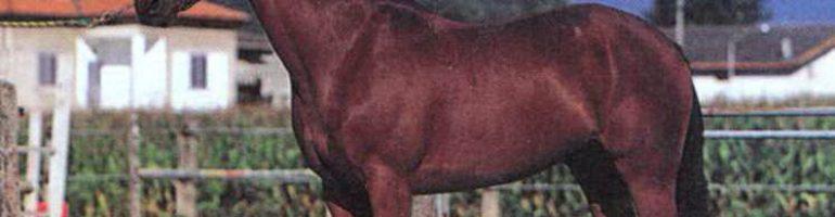 Лошади породы Салерно