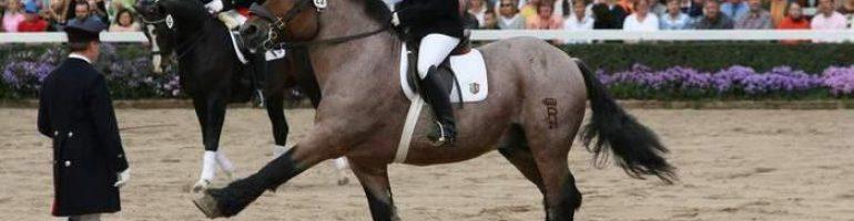 Лошади породы арден