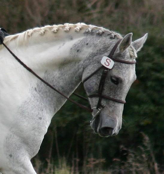 Лошадь породы сток хорс, фото