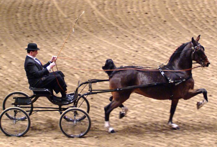 Лошадь породы хакне в упряжке, фото