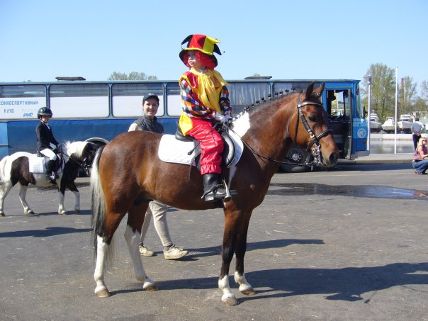 Лошадь породы хакне с цирковым работником, фото