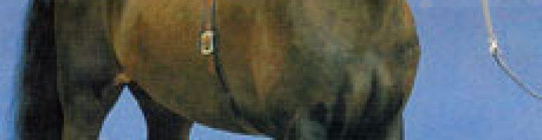 Лошади и пони породы хакне