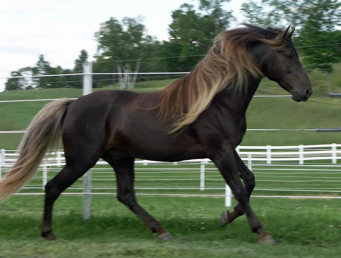 Лошадь скалистых гор, фото