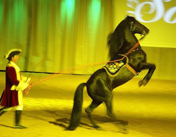 Меноркская лошадь на сцене, фото