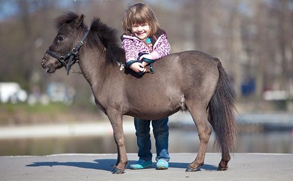 Миниатюрные лошади породы Фалабелла с ребенком, фото