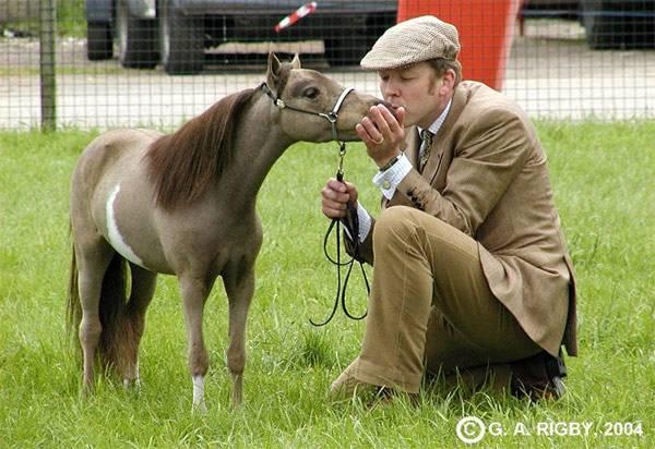 Миниатюрные лошади породы Фалабелла, фото