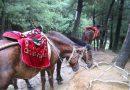 Монгольский пони
