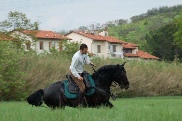 Наездник скачет на лошади породы Мареммано, фото