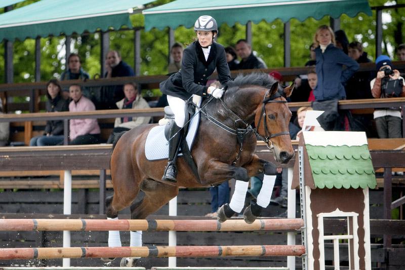 Баварская теплокровная лошадь, фото