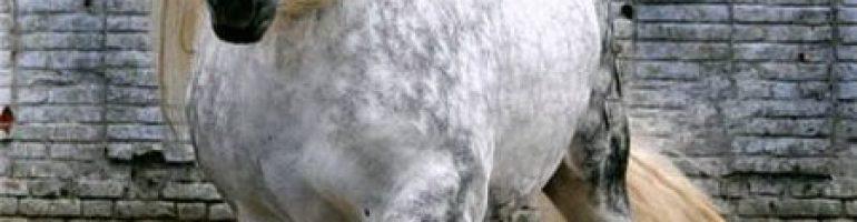 Лошадиная порода Першерон