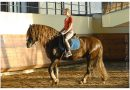 Русский тяжеловоз (русская тяжелоупряжная порода лошадей)