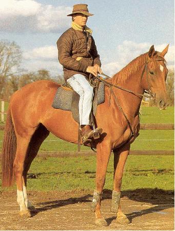 Современная Австралийская пастушья лошадь, фото