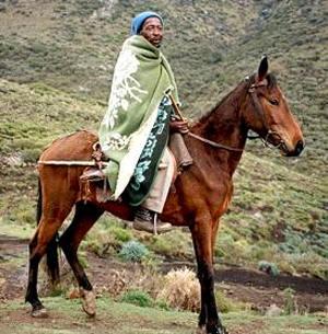 Лошади породы Басуто, фото