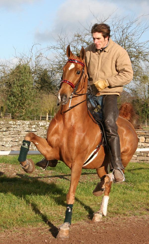 Теннесийская прогулочная лошадь с наездником, фото