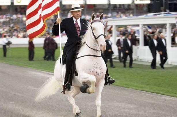 Теннесийская прогулочная порода лошадей с наездником, фото