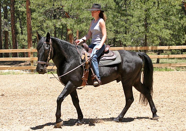 Теннесийская прогулочная порода лошадей с пассажиром, фото