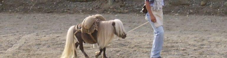 Самая маленькая лошадь в мире — фалабелла