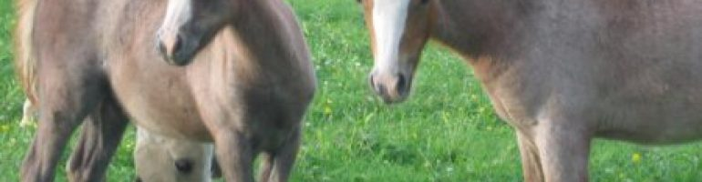 Рыже-чалая масть лошадей
