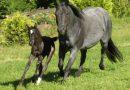 Крапчатая масть лошадей
