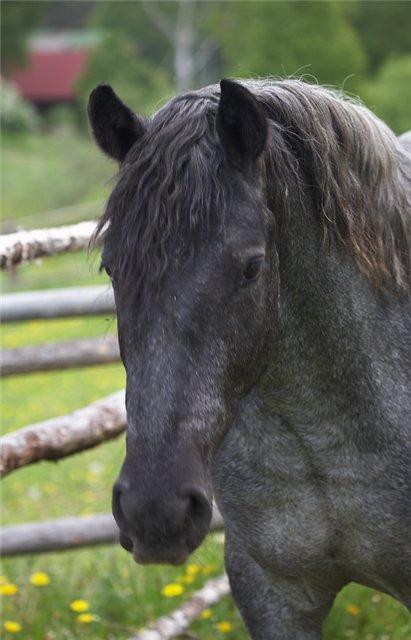 Фото красивой лошади вороно-чалой масти