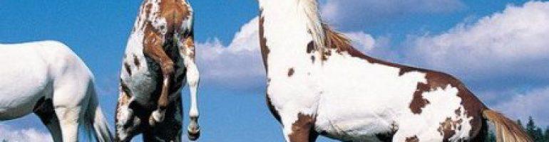 Рыже-пегая масть лошадей