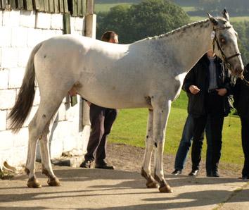 Фото лошади бело-чубарой крапчатой масти