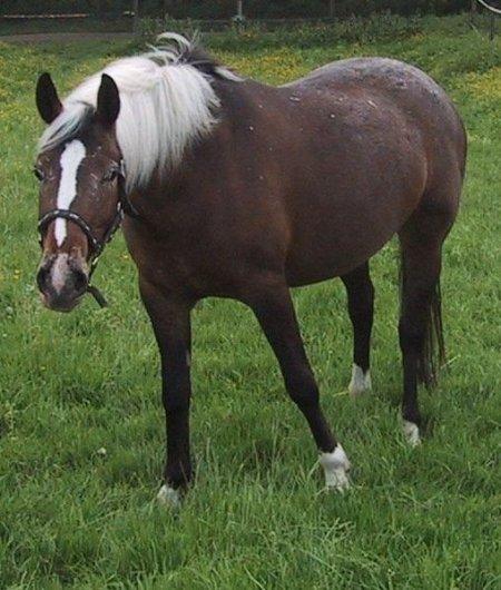 Фото лошади игреневой в инее масти