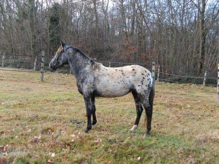 Фото лошади мраморной масти на лугу