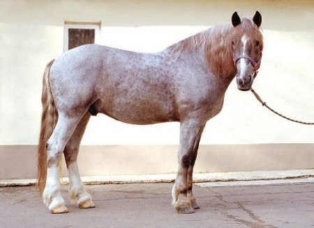 Фото лошади рыже-чалой масти