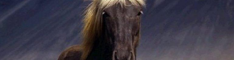 Серебристая масть лошадей