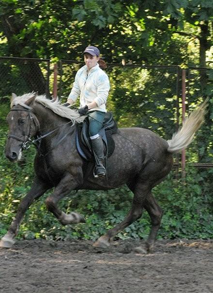 Фото лошади серебристо-вороной масти