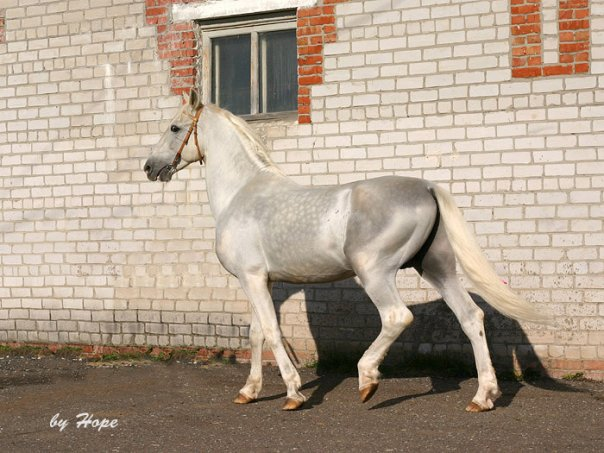 Фото лошади серебристо-серой масти