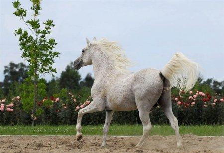 Фото лошади серой в красную гречку (форелевой)