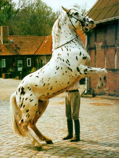 Фото лошади чубарой крапчатой масти