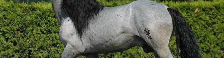Вороно-чалая масть лошадей