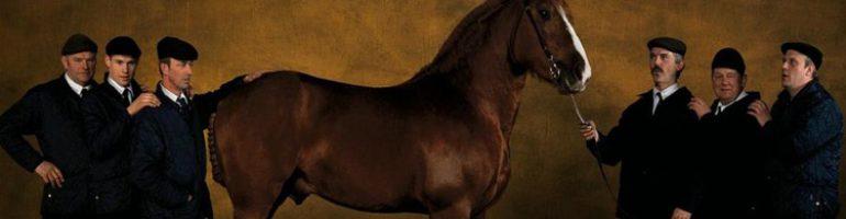 Французская верховая лошадь (Сель)