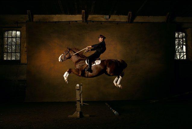 Французская верховая лошадь (Сель), фото