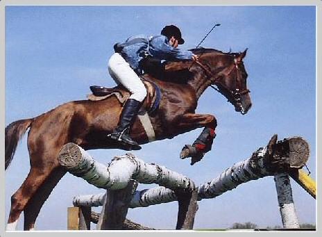 Черноморская лошадь в прыжке, фото