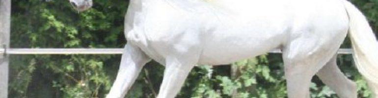 Прекрасные лошади из Испании — Андалузская лошадь