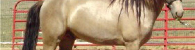 Шампанская масть лошадей